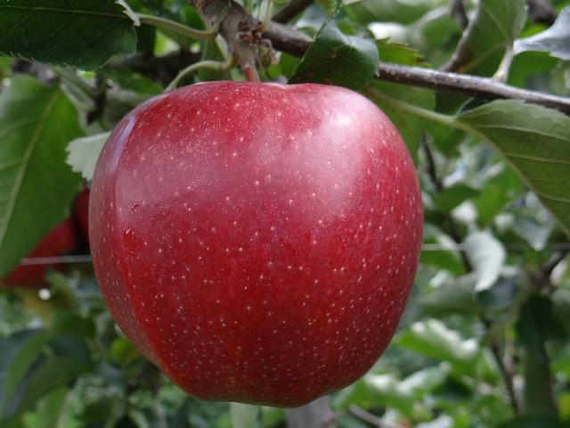 普通のリンゴも腐らない