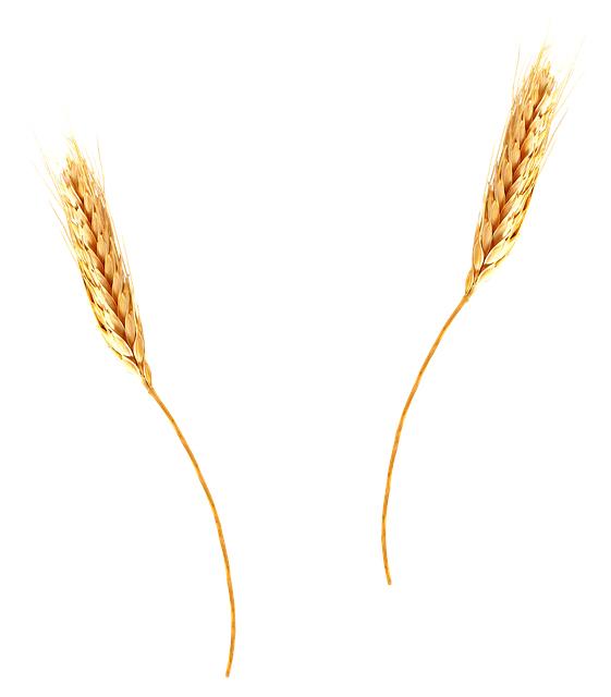 オーストラリア産大麦より基準を超える殺菌剤が